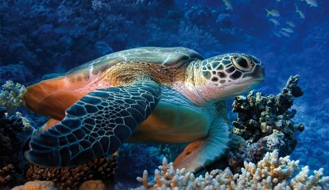 Risultati immagini per tartaruga marina